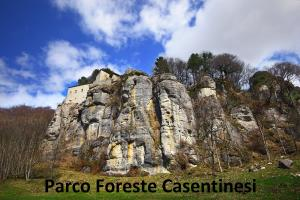 Parco foreste casentinesi